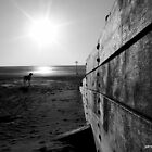 dog on Witterings Beach by garry stokoe