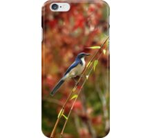 Blue Bird Enjoying Fall Color iPhone Case/Skin