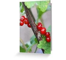 Red Currant Dreaming Greeting Card