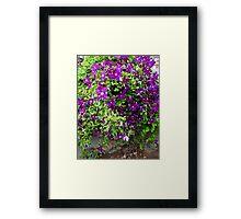 Clematis Bouquet Framed Print