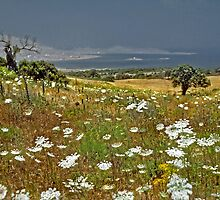 Island of Paros--Queens Anne Lace by milton ginos