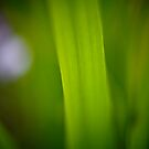 Blade of Grass by steffen