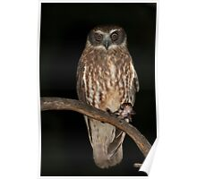 Boobook Owl with dinner Poster