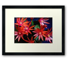 Red Sunrise Cactus Flowers Framed Print