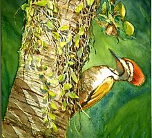 Flameback Woodpecker id1270261  by Almondtree