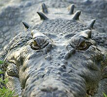 The smiling croc 2 by Rosie Appleton