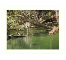 Turtles at Blue Springs Art Print
