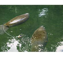 Manatees in Blue Springs Photographic Print