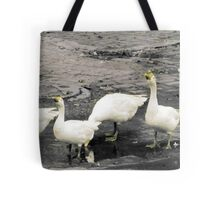 Marching ducks Tote Bag