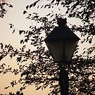 lamp post by Sheila McCrea