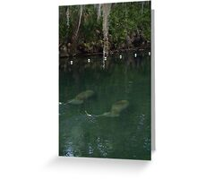Manatees at Blue Springs Greeting Card