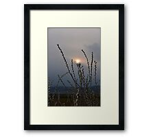 Willow buds in twilight zonw Framed Print