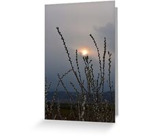 Willow buds in twilight zonw Greeting Card