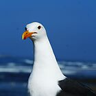 Seagull by JohnBassler