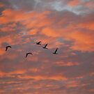 Flying home !!! by Heabar