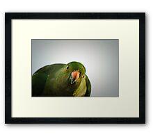 King Parrot - Australian Framed Print