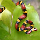 king snake1 by Ted Petrovits