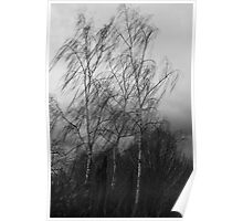 Trees in the wind Poster