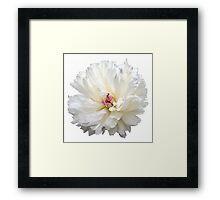 White Blossoms Framed Print