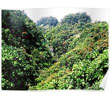 Roadside Hawaiian Waterfall Poster