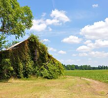 Vine Covered Barn by Jeff Ore