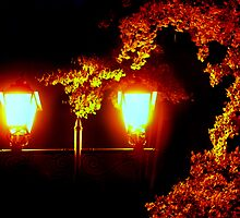 Autumn light... by Tamara Travers