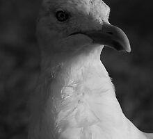 Wise Bird by ViktoryiaN