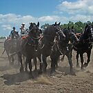 Black Percheron Eight Horse Hitch by Al Bourassa