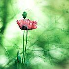 Poppy Landscape by DavidYates