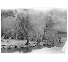 Infrared trees, Mowamba River Poster