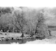 Infrared trees, Mowamba River Photographic Print