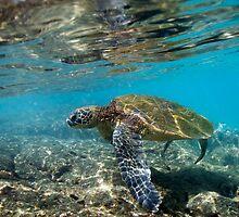 Turtle by KOKOPEDAL