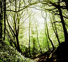 Wild Garlic Forest by DavidYates