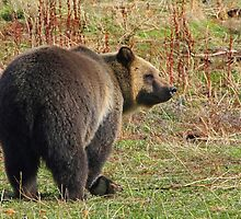 Grizzly Bear's Breakfast by A.M. Ruttle