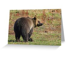 Grizzly Bear's Breakfast Greeting Card