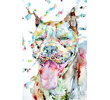 WATERCOLOR PIT BULL Photographic Print