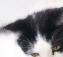 cats eyes by Debby Chadwick