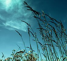 Grass against the summer sky by DavidYates