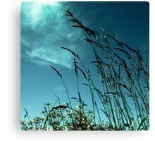 Grass against the summer sky Canvas Print