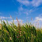 Summer Meadow by DavidYates