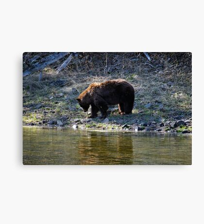 """Cinnamon"" Black Bear - Reflection Canvas Print"