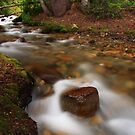 Tranquility In the Stream by Gene Praag