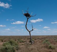 The nest tree, Hay plains. by Syd Winer