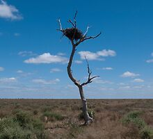 Lone tree, very lonely nest by Syd Winer