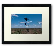 Lone tree, very lonely nest Framed Print