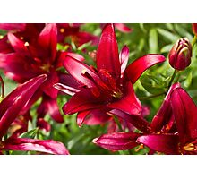 The Spotted Lilies Photographic Print