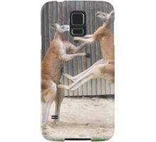 Pretty Kangaroo