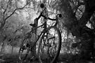 Bike, Licola 2008 by Syd Winer