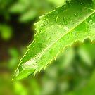 Summer Rain by Brad Sumner