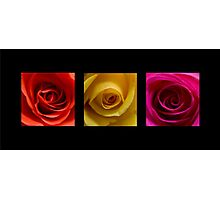 Triptych Orange Yellow & Pink Roses Photographic Print